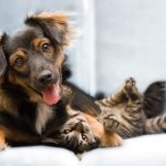 Dealing With Dog Carpet Accidents